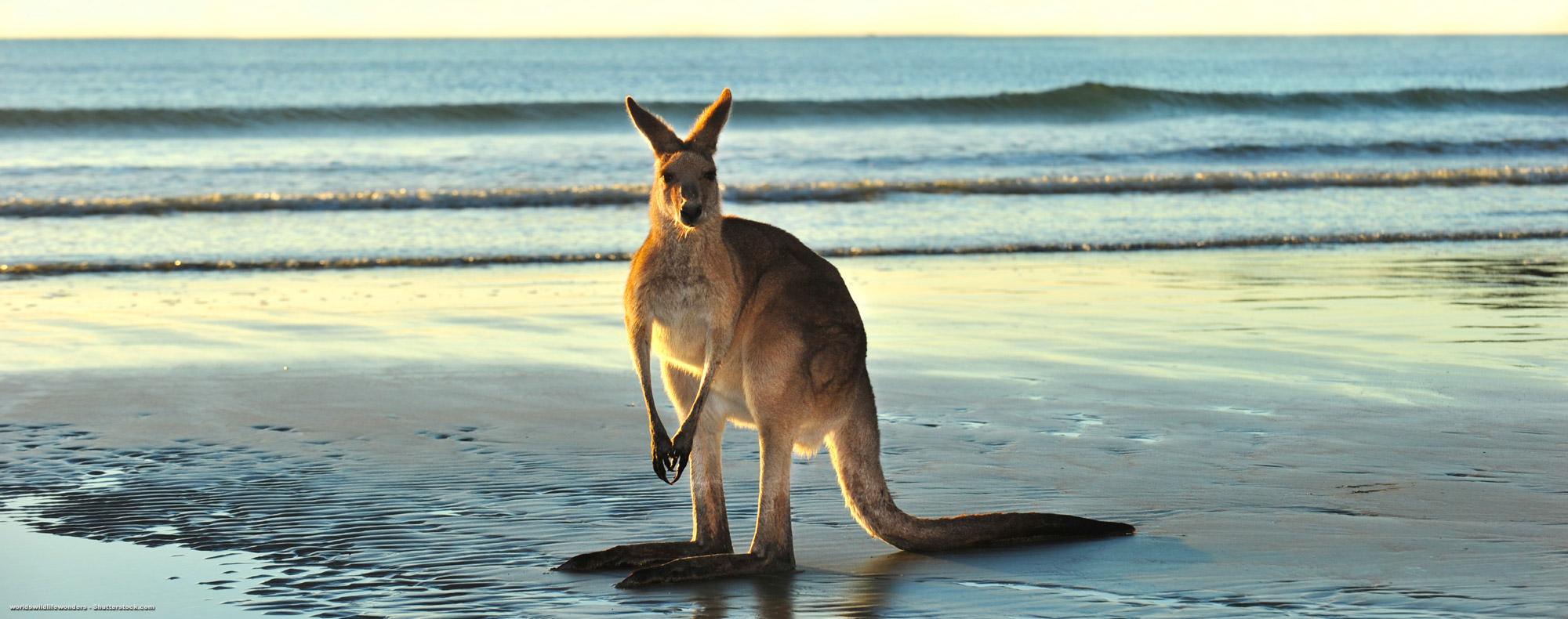 Sprachreisen nach Melbourne