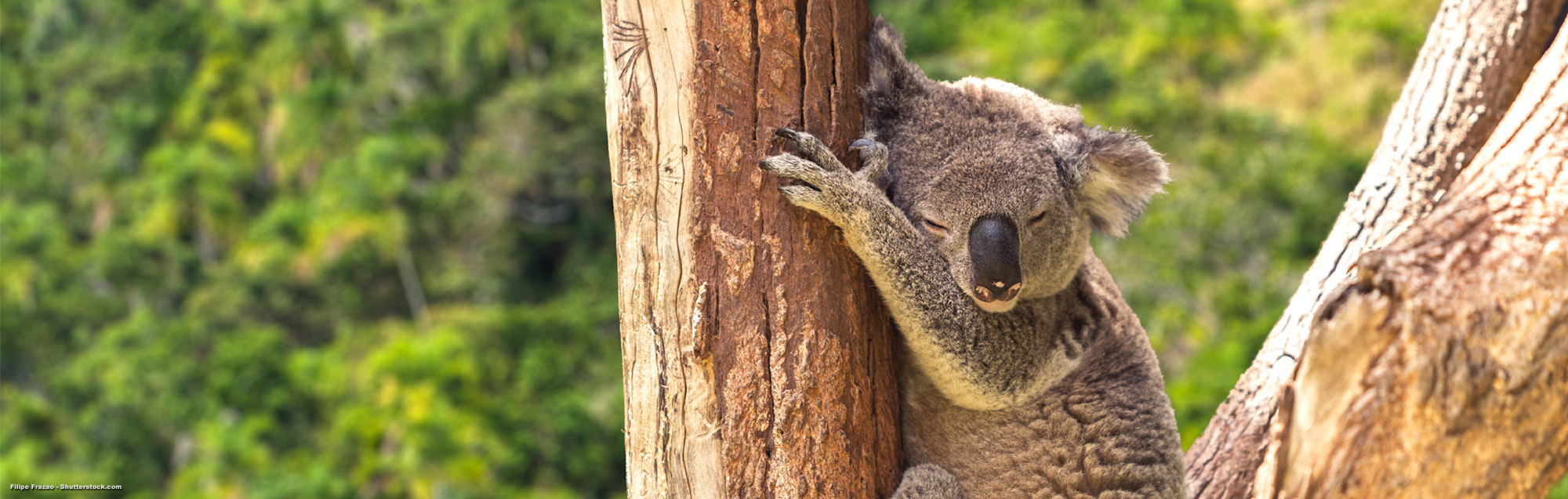 Pasos para obtener tu visa para estudiar en Australia