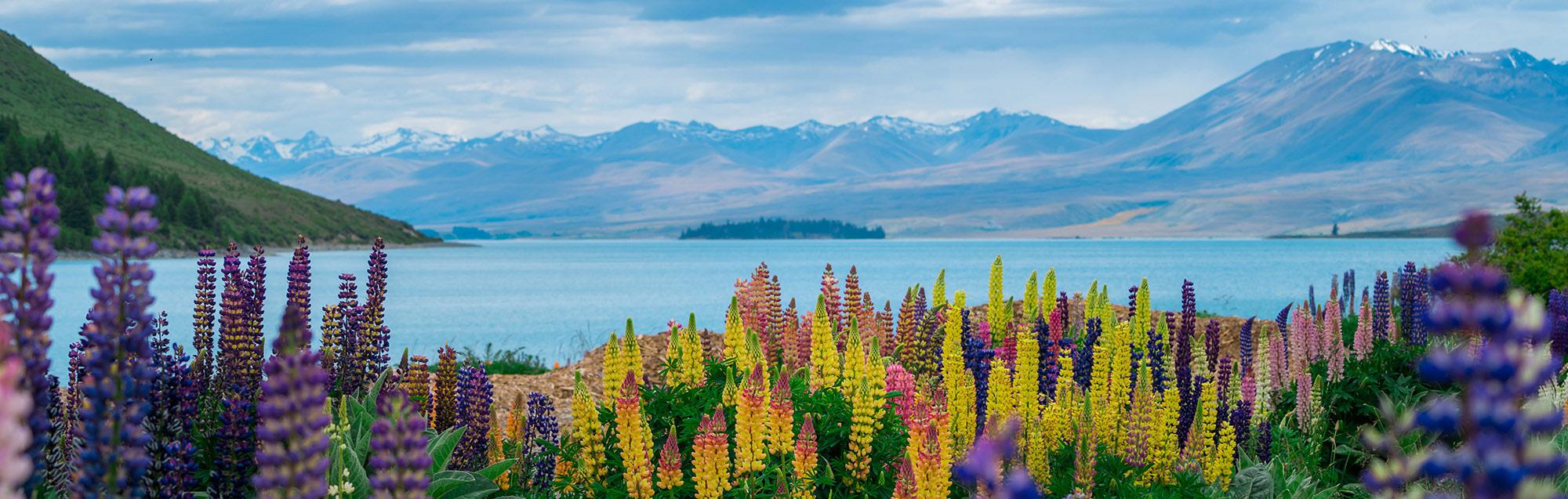 Sprachreise Neuseeland